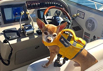 dog in a life jacket on a boat