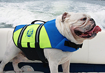dog wearing a lifejacket on board