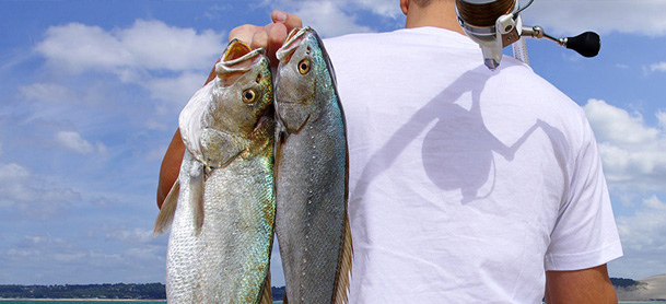 Back of man in white t-shirt with a fishing rod over one shoulder and two caught fish over another.