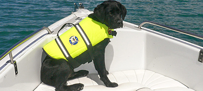 dog in life jacket
