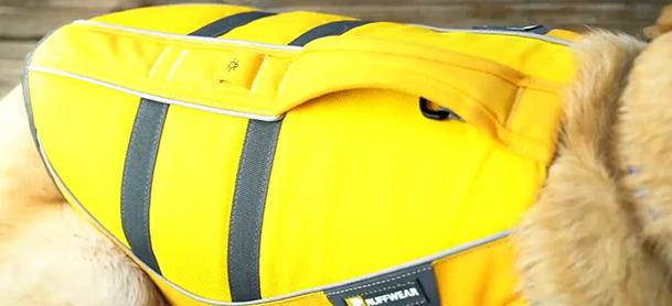Bright yellow lifejacket on dog