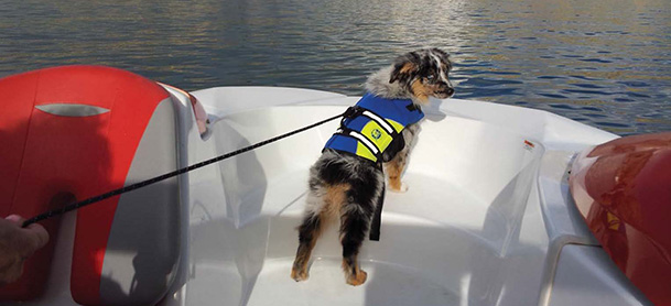 A dog in a blue life jacket standing on the bow of a boat, looking back toward the camera