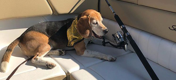 A dog laying on a seat on a boat next to a fishing rod