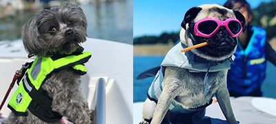 On the left, a gray terrier in a green life jacket. On the right, a pug wearing a life jacket and sunglasses