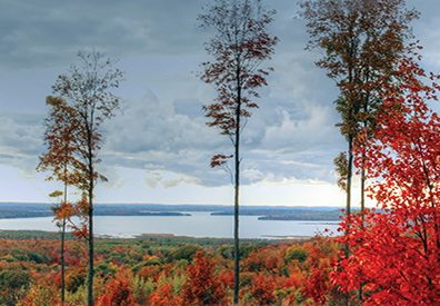 multicolored trees on top of a hill overlooking lake