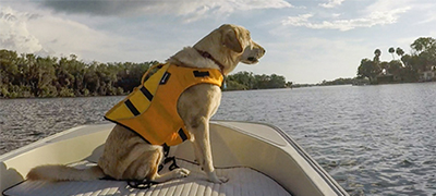 dog in yellow lifejacket sitting on the front of a boat