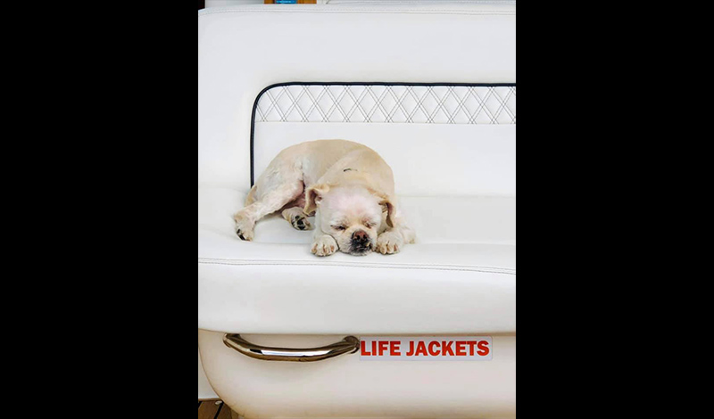 a small dog sleeping on a boat
