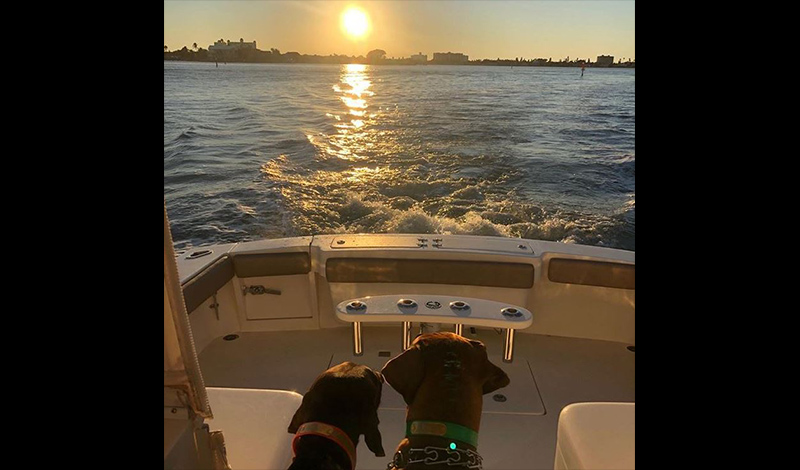two dogs looking off of the bow of a boat into the water as the sun sets