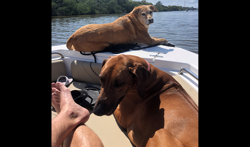 two large dogs sitting on a boat with water in the background