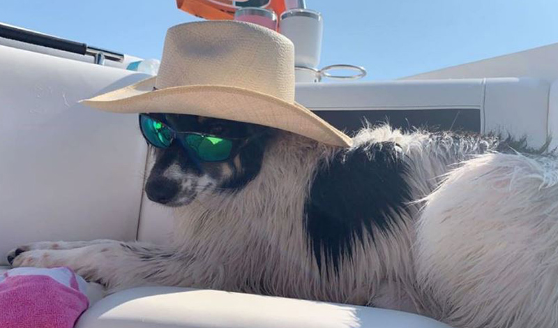 a small dog wearing sunglasses and a sunhat while sitting on a boat