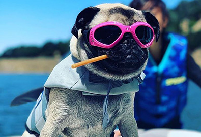 A pug in pink sunglasses and a life jacket resting on a boat