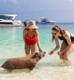 Ladies with a pig in the water in the Abacos