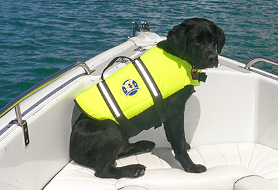 dog on board waring a life jacket