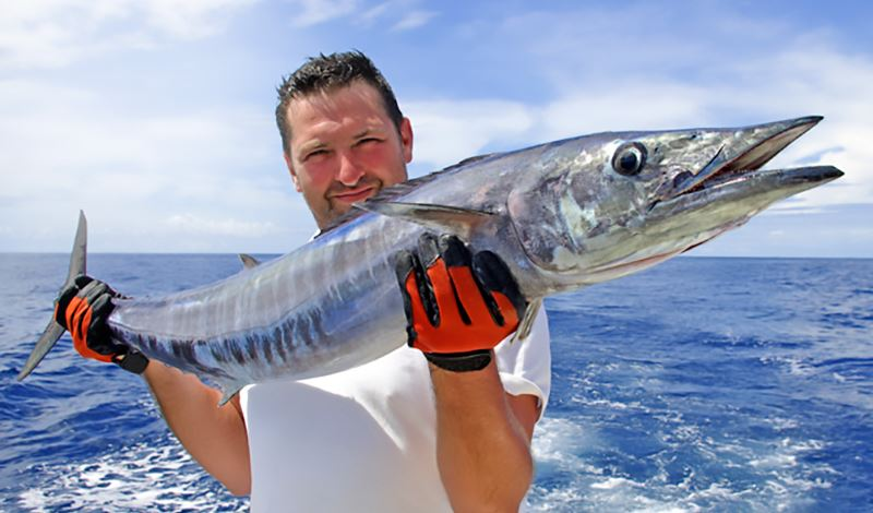 wahoo-fishing-seminar_email-header.jpg