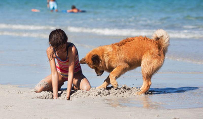 doggie-getaway---fotolia.jpg