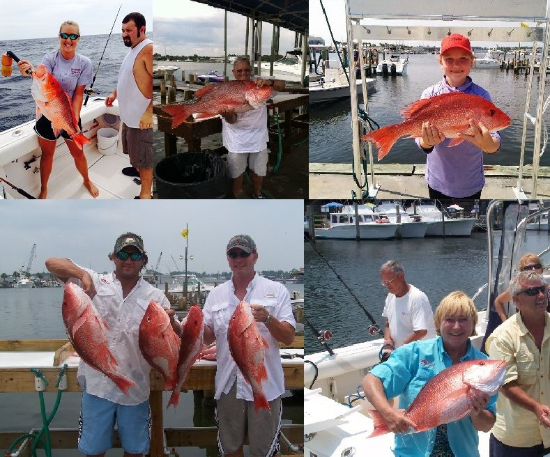 red snapper and bottom 2