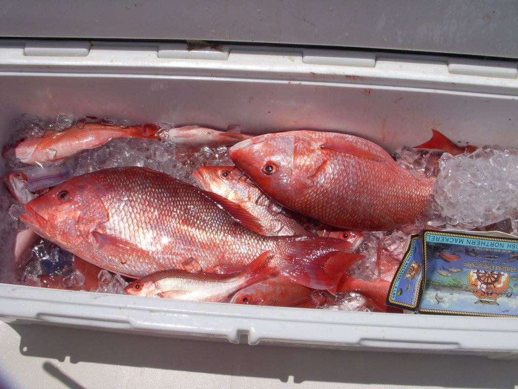 red snapper and bottom 3