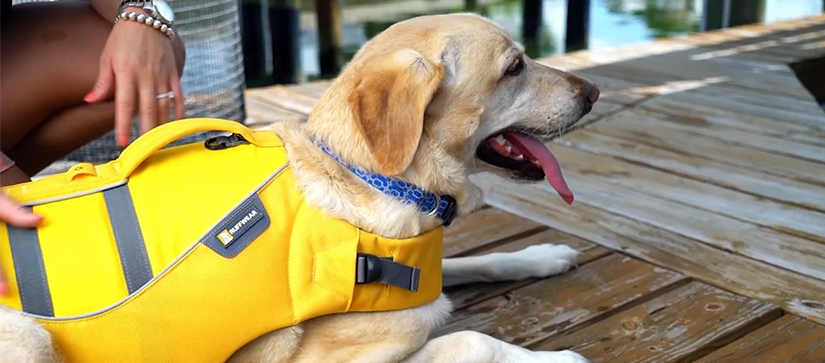 dog in yellow lifejacket laying on dock