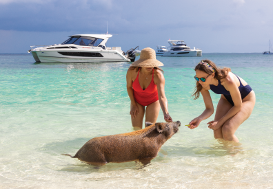 People playing with a pig on the beach in The Bahamas