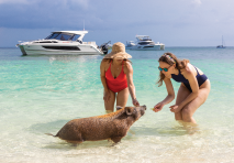 people playing with a wild pig in the bahamas in the water