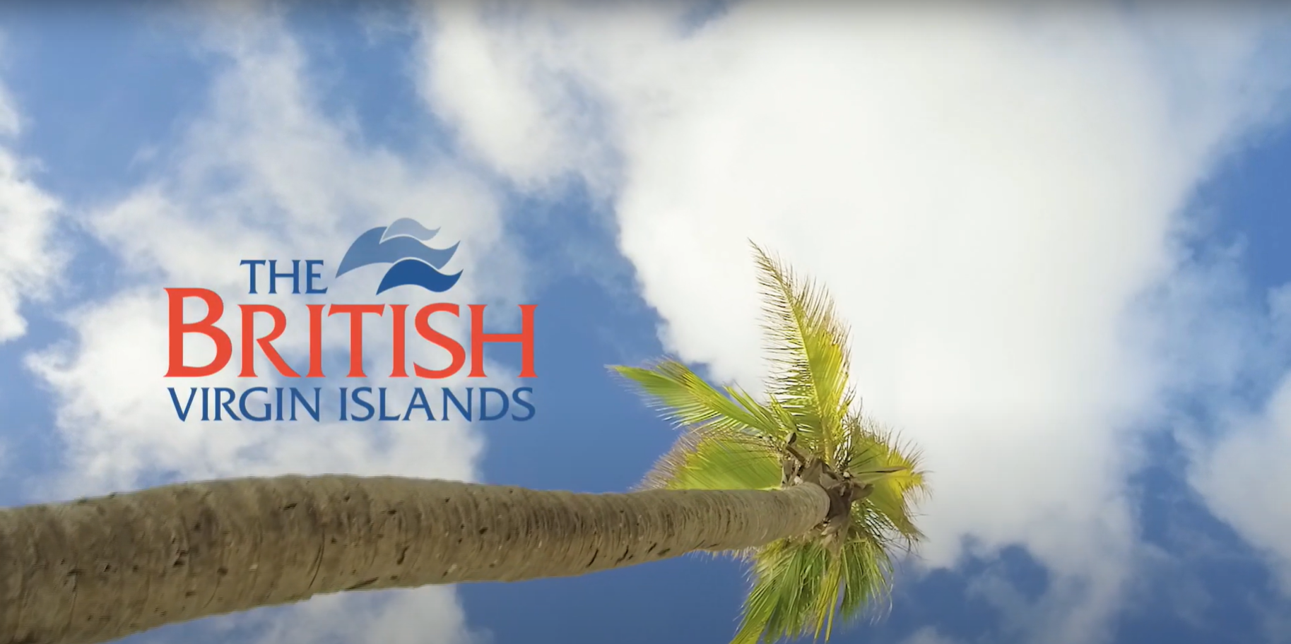 Palm Tree with sky behind it and British Virgin Islands logo