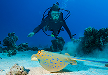 scuba diving in cayman islands