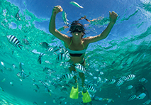 Snorkeling in St. Lucia & Grenadines