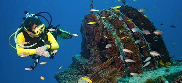 Snorkler looking at wreckage