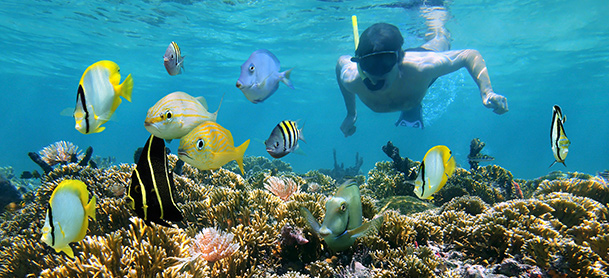 Man snorkeling amongst colorful fish